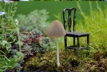 Fairy Gardens, Terrariums, and other lovely container inspiration / by Adriene Smochek
