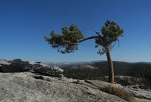 Yosemite / One of the most incredible places on earth... / by Polly Holyoke