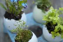 Grow Great Gardens / by Earth Eats