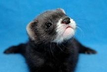 Otters, Prairie Dogs, and Ferrets - OH, MY!! / by Colleen Star Koch