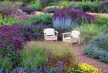 garden / by Yana Kvasha