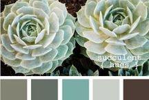 Colors & Patterns / by Kelsie Harris