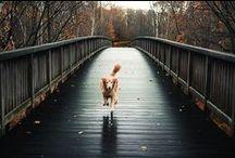 Autumn / by Matylda G