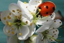 Flori preferate / Florile sunt cele care ne aduc bucurie atunci cand le primim dar si o stare de bine atunci cand le daruim. Hai sa le admiram impreuna. / by Cristinne Cosmetics