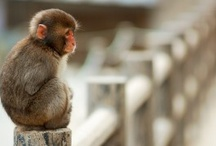 Monkey Mania / by Catherine Forbes