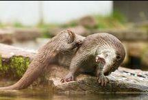 Otterriffic! / by Denise Treacy