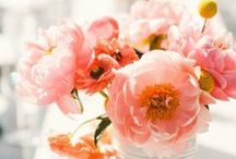 Flowers Oh So Pretty / by Laura Thai