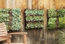 Garden / by Laura Partin