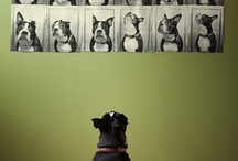 Boston Terriers / by Shannon Cones