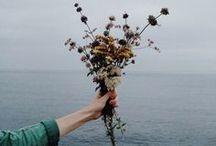 Flowers / by Jenn Shuffle
