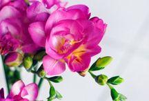 Garden Ideas / by Felicity S