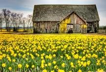 Farms, Barns & Churches / by Jessica Heaton