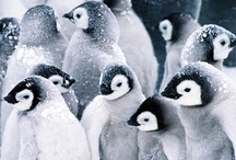 Penguins / by Andrea Knight