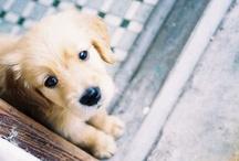 Puppies <3 / by Arin B. Forstenzer
