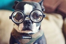Dogs in Glasses / Dogs are awesome and what better way to commemorate them then with a fancy pair of glasses and a snapping shot. / by warmwhisper