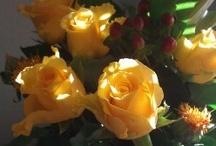 Flowers / Beautiful flower photographs / by Cynthia Marsh
