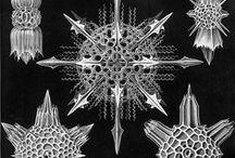 Fractal Design / by Toxi Dixon