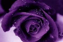 The Color Purple / Purple is the color of good judgement. It is the color of people seeking spiritual fulfillment. It is said if you surround with this color, you will have peace of mind.  / by ღ❧Keyshaღ❧
