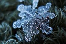 Winter & Christmas / by Misty Jackson