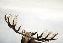 Animals / by Carrie Shryock (1canoe2)