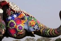 Elefants / by Cristina Alcover