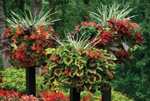 For the Home_Outdoors / all things for the patio, porch, garden and yard.  / by Jennifer Fisher