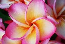 Bloom / by Renee