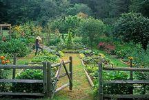 For Our Garden. / Ideas for our future garden. / by Zulma Hidalgo