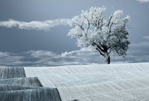 Trees, beautiful trees / by Lisa RD