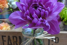 Our Flower Pics / by Philosophy Flowers Official