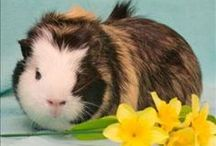 MHS Adoptable Small and Furry / Looking for a guinea pig, hamster, gerbil, rat, or mouse? Check out these furry friends!  / by Michigan Humane Society
