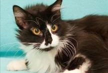MHS Adoptable Cats / Looking for a cat? Check out these adorable felines! / by Michigan Humane Society