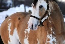 Horses / by Beverly Fugazzi