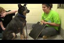 Pet Training Tips / Training tips to help your dogs and cats! / by Michigan Humane Society