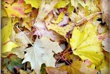 Autumn  / The beauty of Autumn / by Claire Toplis