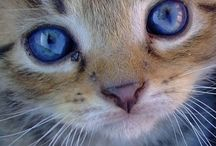 I love kitty cats! / by Cj McCormick