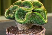 cacti & succulents / by Vesna Demajo