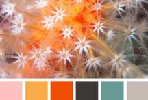 Colours  / by Lara Nicholls