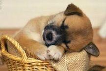 So Cute!!!! / by Benita Hunt