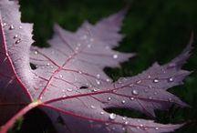 Autumn  / Fall, My favorite season :) / by Karla Morgan