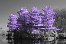 Beautiful Trees !!!  / by Mike Hill