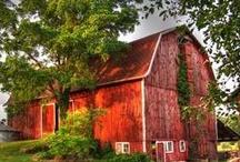 Bucolic Barns / by Vivian Ericson