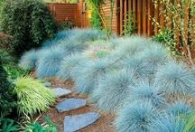 Grasses in the Garden   / by Mercia Merino de Medeiros