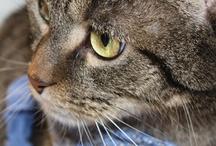 Cats / by Karin Schuhmacher