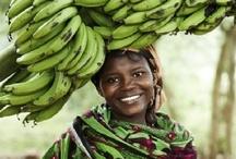 Africa / by Joanne Erickson