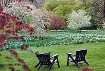 Garden Ideas / by Mandy Carney