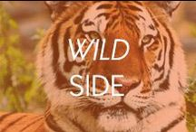 Wild Side / by Amrita Singh Jewelry