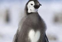 Penguins  / by Donna Borton-Chicone