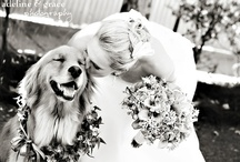 Pets In Weddings / I thought it would be fun to put together a board featuring pets in weddings.  It shows that our pets are a very important part of our lives.  I know I love mine!  / by Wedding Colors