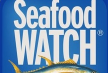 Sustainable Seafood / Sustainable seafood recipes, news, apps ...  #recipes #sustainable #seafood #apps / by Carolyn Sorensen